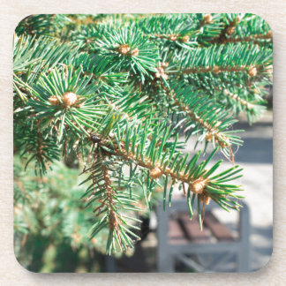 Conifer branch at the city street beverage coasters