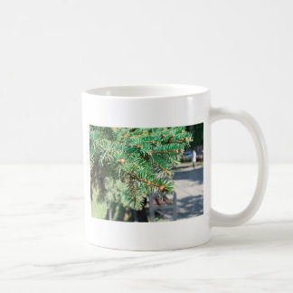 Conifer branch at the city street coffee mug