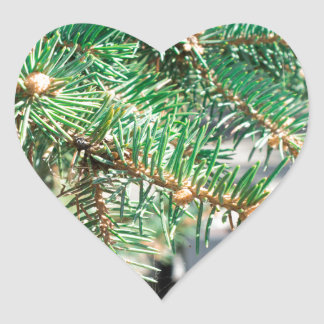 Conifer branch at the city street heart sticker