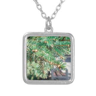 Conifer branch at the city street silver plated necklace