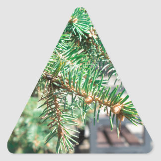 Conifer branch at the city street triangle sticker