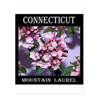 Connecticut Mountain Laurel Postcard