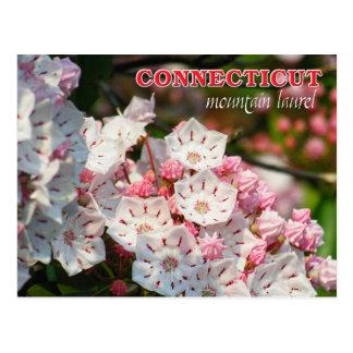 Connecticut State Flower: Mountain Laurel Postcard