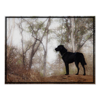 """Conservation Canine """"Scooby"""" Picture/Print Poster"""