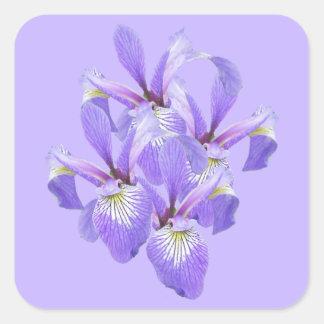 Contact pourpre d'iris de ressort sticker carré