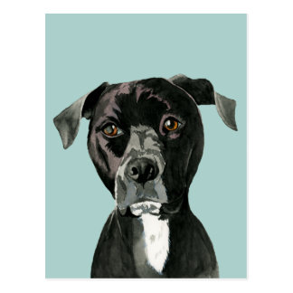 """Contemplating"" Pit Bull Dog Painting Postcard"