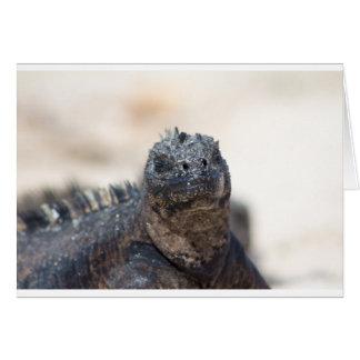Content Marine Iguana Card