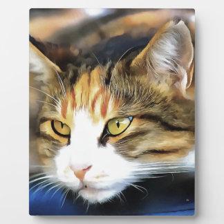 Contented Cat Plaque
