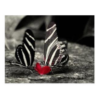 contrast butterfly postcard