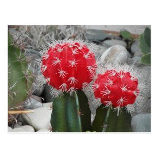Contrast cactus postcard