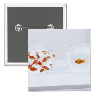 Contrast of  many goldfish in fishbowl and 2 inch square button