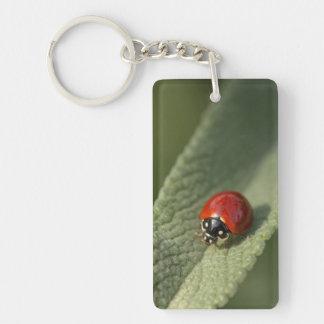 Convergent ladybird beetle on Cleveland sage Double-Sided Rectangular Acrylic Keychain