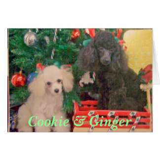 Cookie & Ginger Celebrate Christmas Card