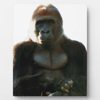 Cool and Funny Gorilla Monkey Animal Plaque