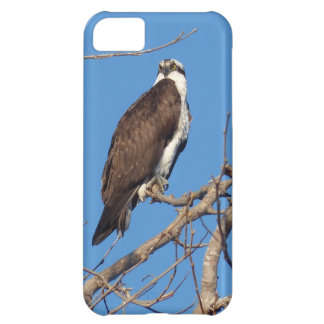 Cool and manly bird of prey 5C iphone case iPhone 5C Cases