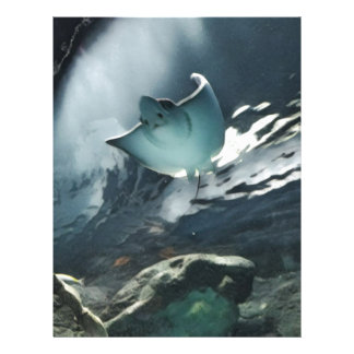 Cool Artistic Underside of Stingray Letterhead