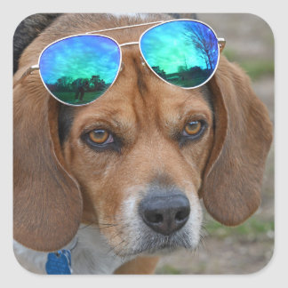 Cool Beagle With Sunglasses On Head Square Sticker