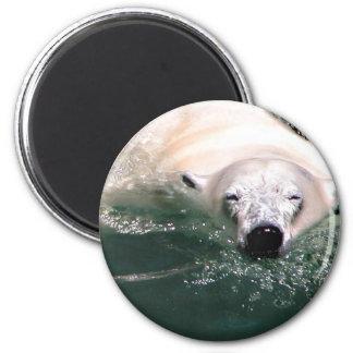 Cool Bear Magnet
