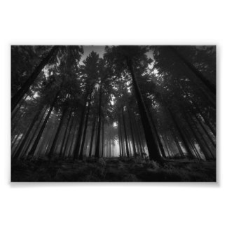 Cool Black and White Forest Fog Silence Gifts Photograph
