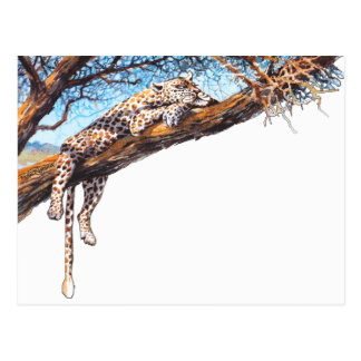 Cool cheetah postcard