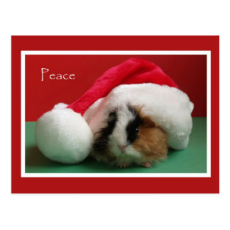 Cool Christmas Guinea Pig Post Card
