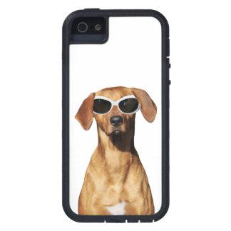 Cool dog, Rhodesian Ridgeback wearing sunglasses iPhone 5 Cover