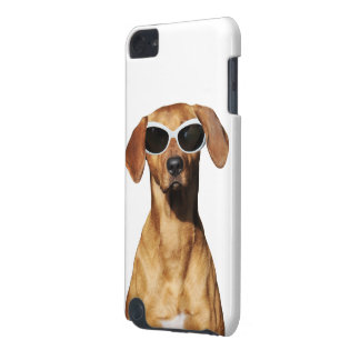Cool dog, Rhodesian Ridgeback wearing sunglasses iPod Touch (5th Generation) Case