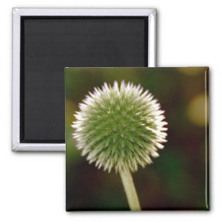 Cool Globe Thistle Magnet