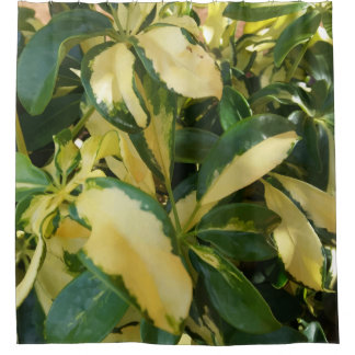 Cool Green and Yellow Leaves Bush Up Close Picture