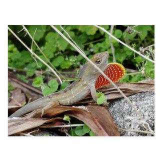 Cool Lizard Anole Postcard