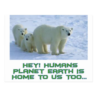 cool polar bear designs postcard