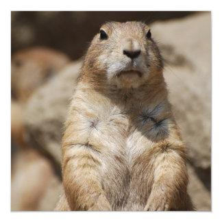 Cool Prairie Dog Invitations
