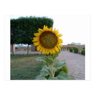 Cool Retro Trendy Hakuna Matata Gifts Sunflower de Postcard