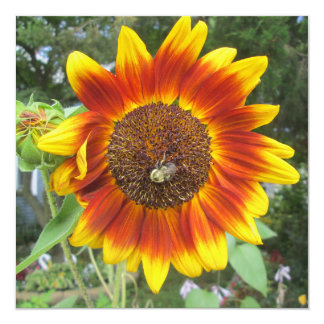 Cool Sunflower Plant Card
