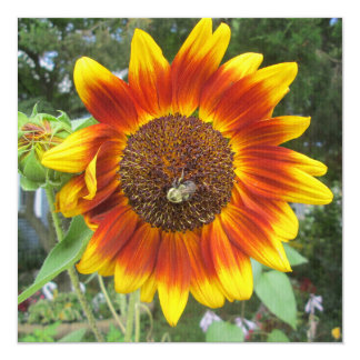 Cool Sunflower Plant 5.25x5.25 Square Paper Invitation Card