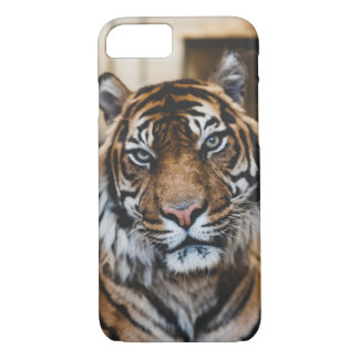 Cool Tiger iPhone 8/7 Cases