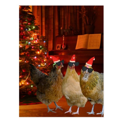 Cool Xmas Chickens Post Card