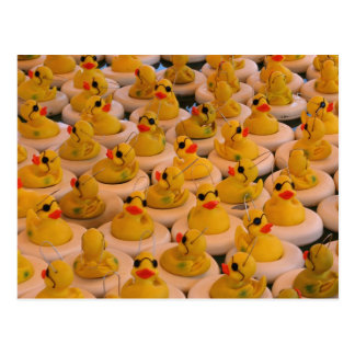 Cool Yellow Rubber Ducks Photo Funny Postcard
