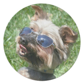 Cool Yorkshire Terrier Plate