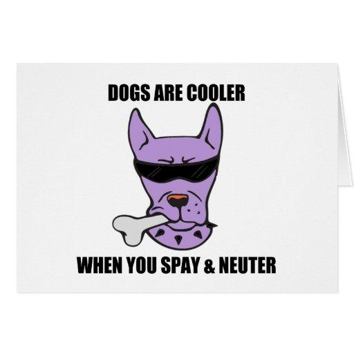 Cooler When You Neuter (purple) Card