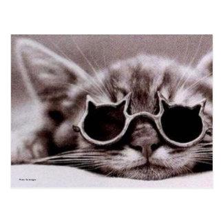 Coolest Cat alive Postcard