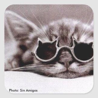 Coolest Cat alive - sqare Sticker