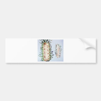Cooley Spruce Gall Adelgid and Gall Pineus Bumper Stickers