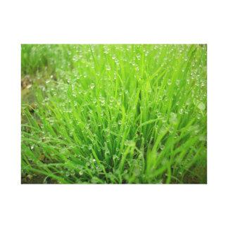 coolness, grass, prairie, morning, grass, meadow, canvas print