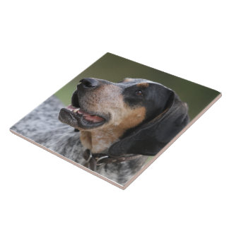 Coonhound Tile
