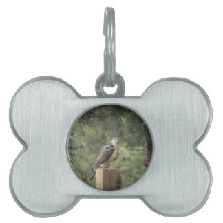 Cooper's Hawk Pet Tag