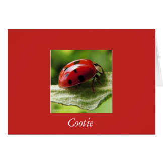 Cootie (lady bug) cards