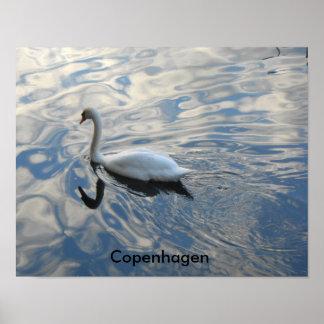 Copenhagen Swan Pond Poster