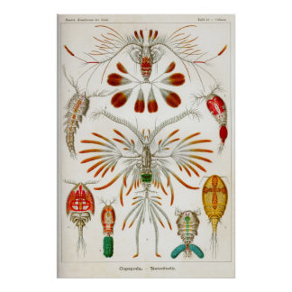 Copepoda (crustaceans) poster
