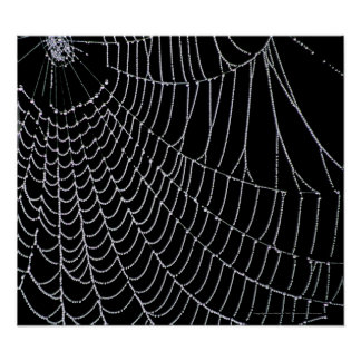 Copie de la toile de l'araignée   affiche